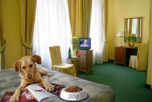отели для размещения вместе с животными