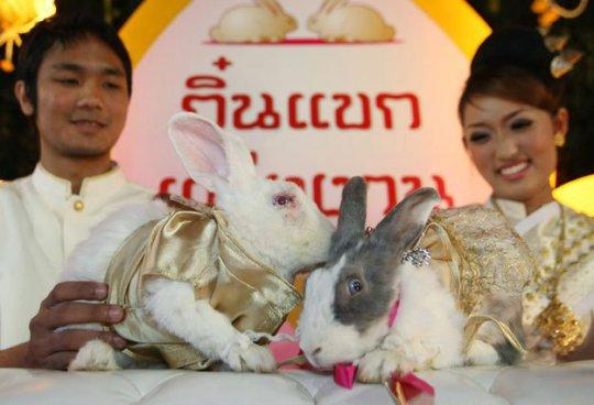 кролики свадьба