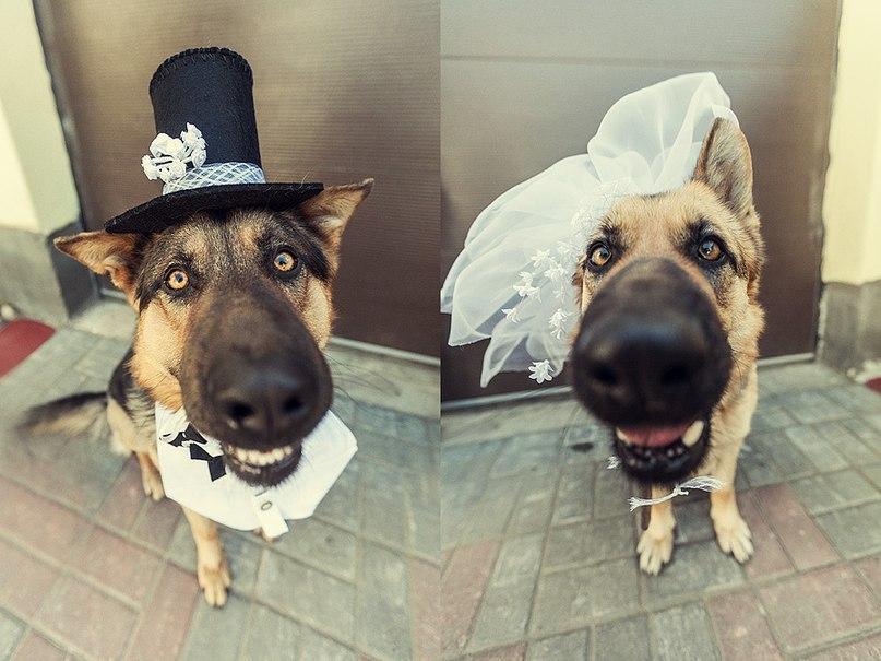 свадьбы для животных