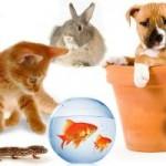 интересные новости о животных