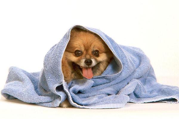 собака после мытья