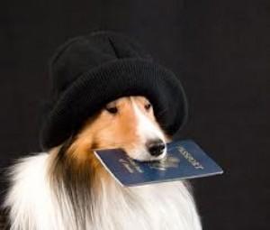kolly s pasportom