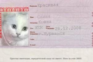 koshka i pasport