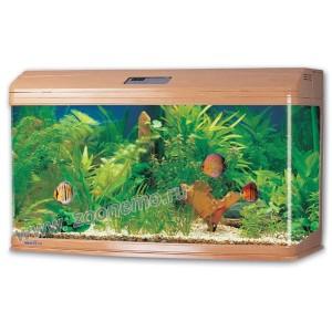 аквариум джебо