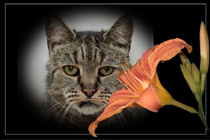 Самый старый кот Найтмег умер в возрасте 32 лет