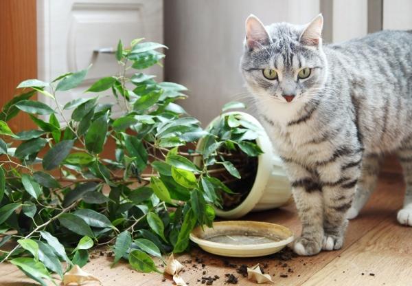 безопасность кота в доме