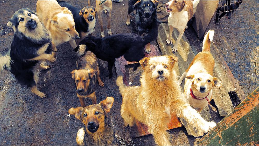 беспородные собаки фото