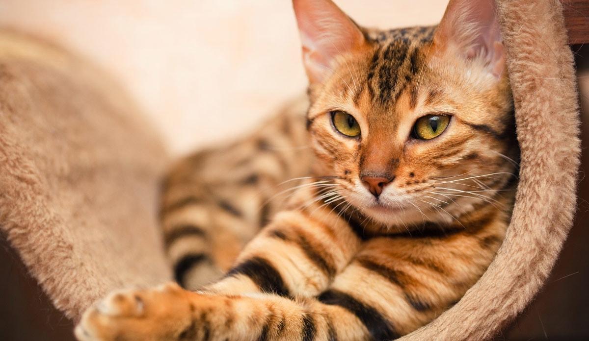 Статистика популярности кошек