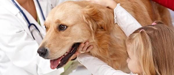 Дирофиляриоз у собак: симптомы, лечение, профилактические меры