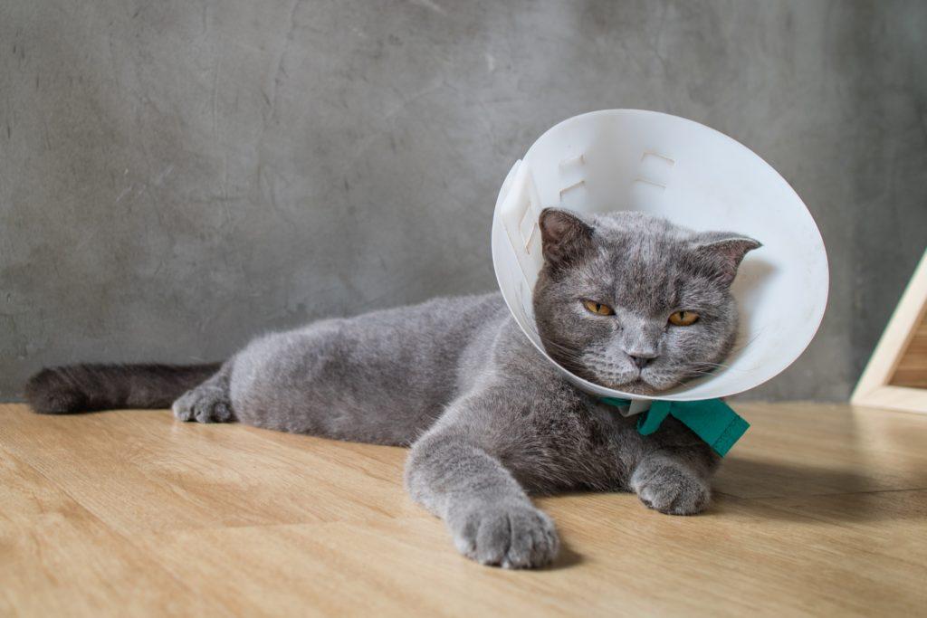 кот на лечении