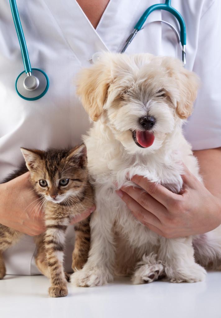 вакцинация собак и кошет от бешенства
