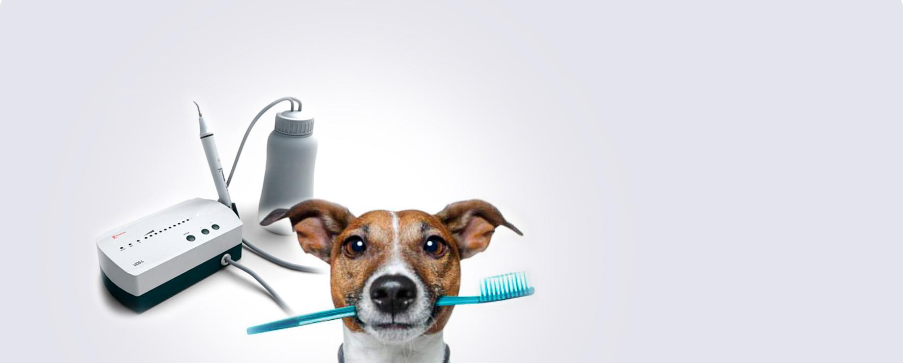 чистка зубов собаке узв