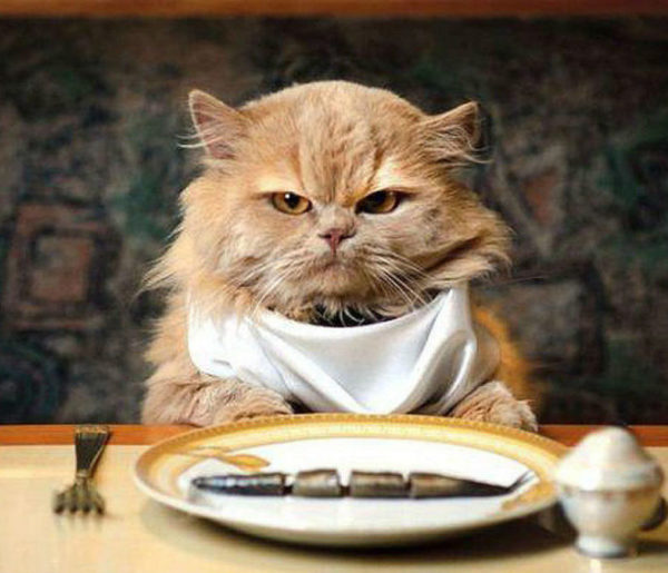 правильное кормление кота сухим кормом