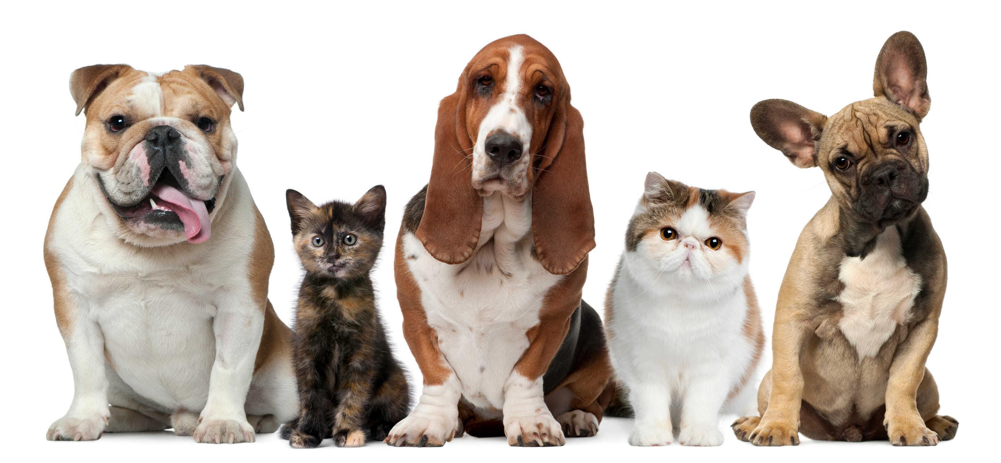 домашние животные - статистика Интерфакс