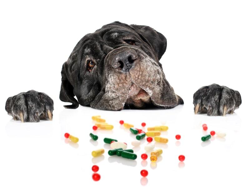 витамины, добавки и подкормки для собак