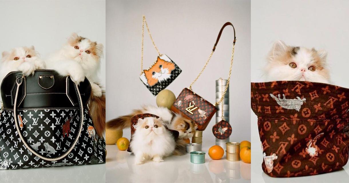 аксессуары луи витон с кошками