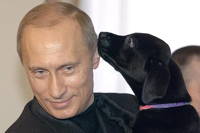 Конни - лабрадор Путина