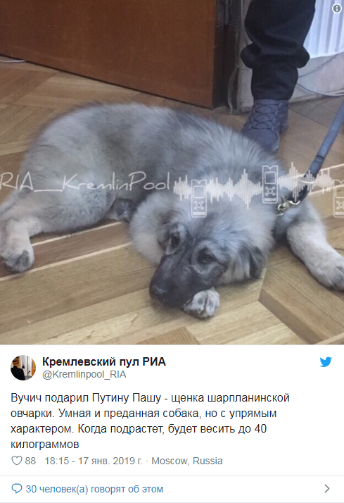щенок шарпланинской овчарки по имени Паша, которого подарил Путину Вучич