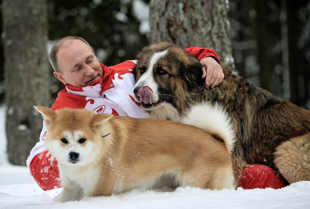 2 собаки путина
