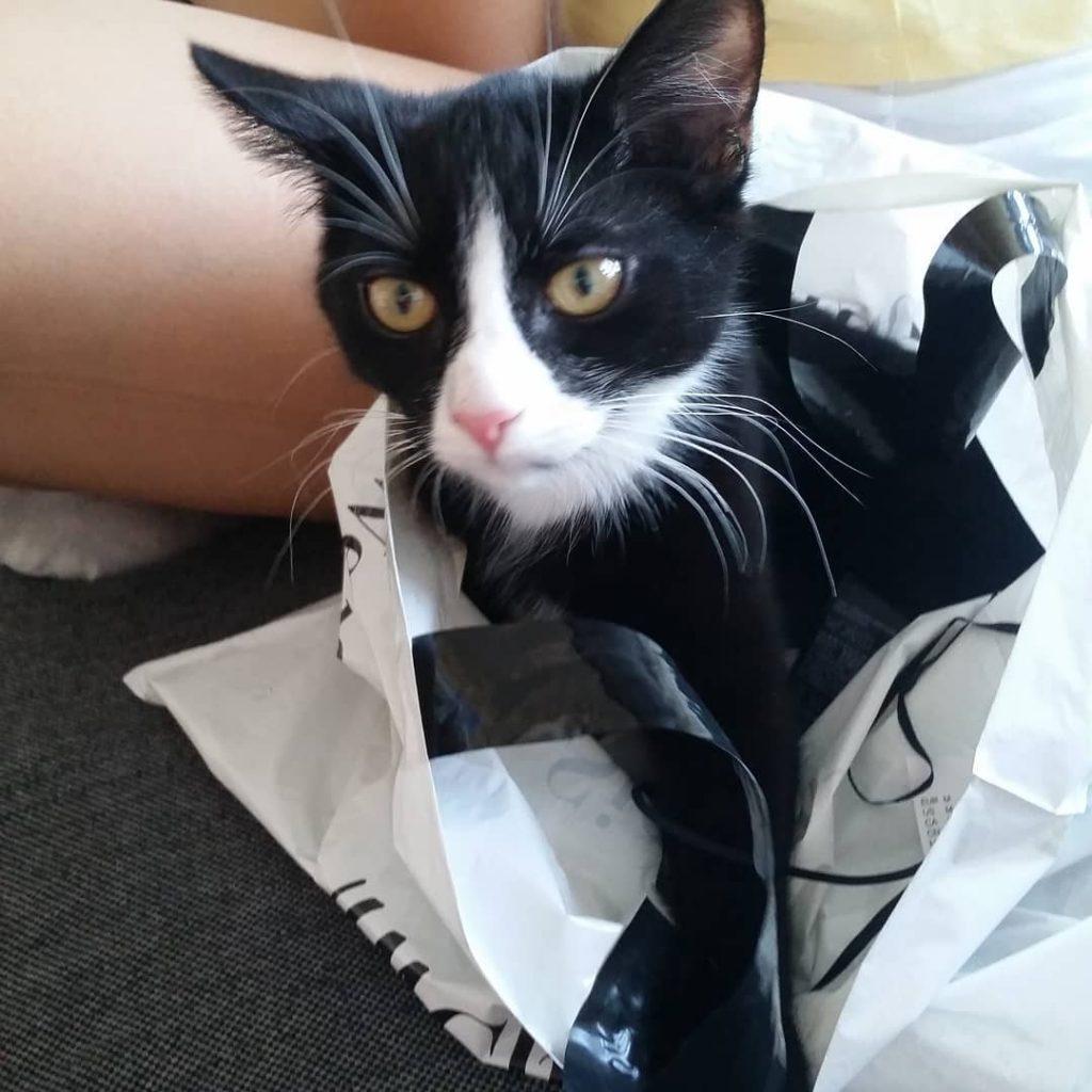 Кошка Элли, которая была черной, а стала белой, фото ДО