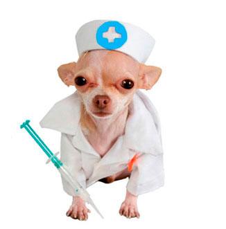 Бесплатная вакцинация животных в Якутске