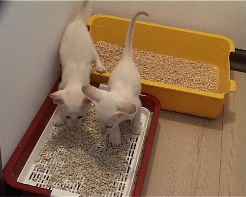 2 котенка и лотки