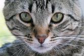 Россияне предпочитают тратить деньги на корм для котиков