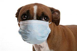 китайский пес заразился вирусом