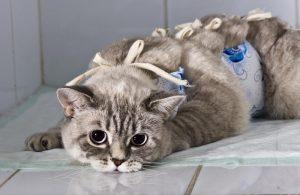 кормление кошки после стерилизации