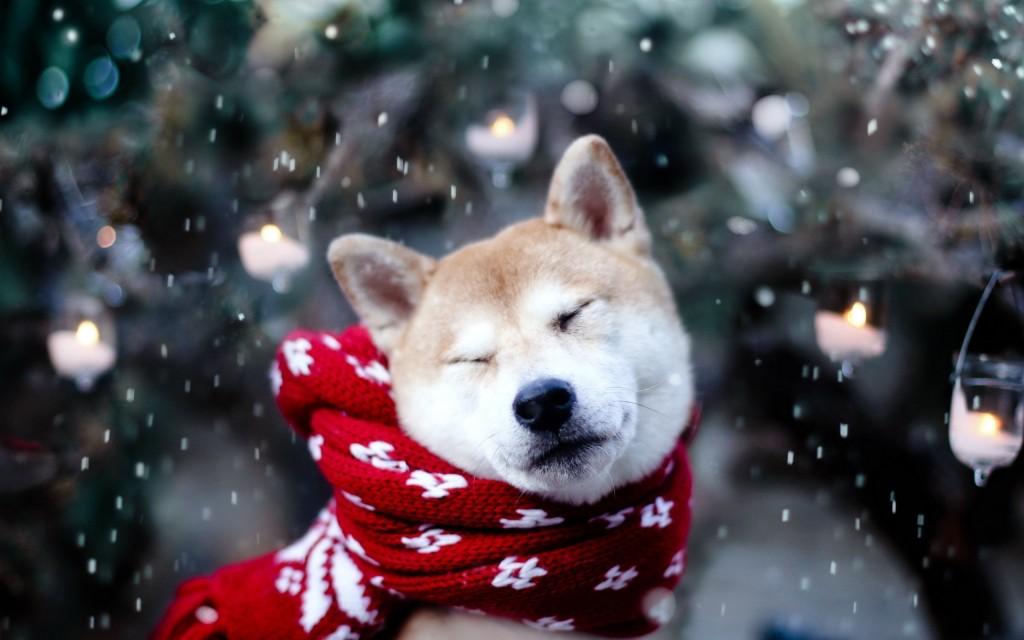 новогодняя акита ину в шарфе