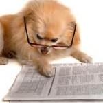 Обязательный учет и регистрация домашних животных — все получат паспорт к 2019 году!