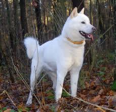айну в лесу