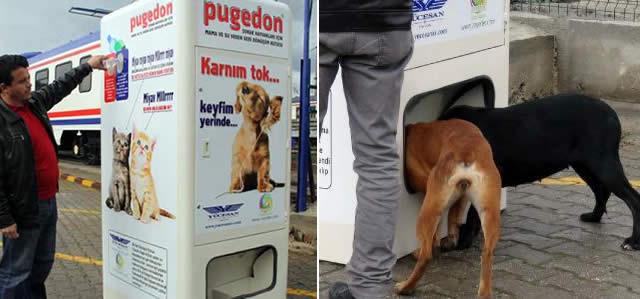 автомат для кормления бездомных животных