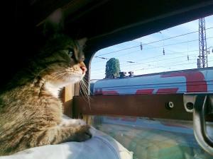 кот в поезде