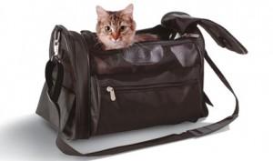 кот в сумке