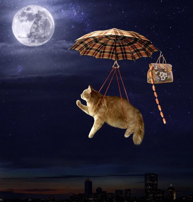 кошка летит на зонтике