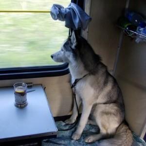 пес едет в купе