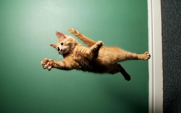 С какой высоты может падать кошка thumbnail