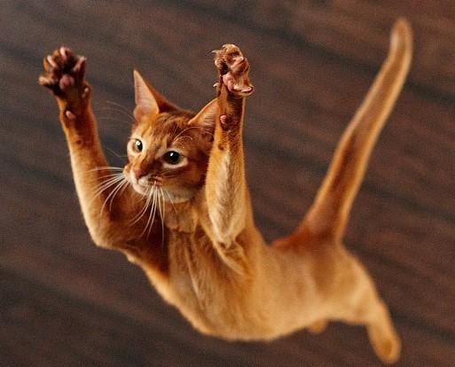 С какой высоты может падать кошка