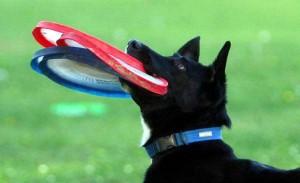 Роуз - самая ловкая собака в мире