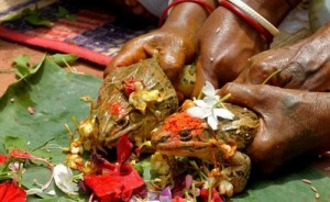 свадьба лягушек