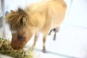 выставка зоомир красноярск