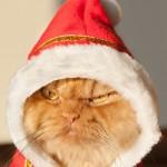 сердитый кот - новости о домашних животных