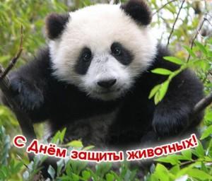 4 октября - Всемирный День Защиты Животных!