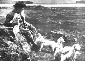 история породы вест айленд уайт терьер