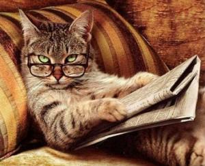 кот-ученый
