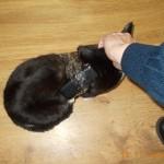Сотрудники исправительной колонии задержали кошку с сотовыми телефонами!