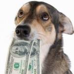собака с деньгами