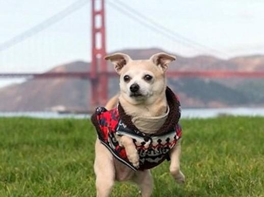 Мэром Сан-Франциско стала собака!