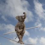 слон на канате